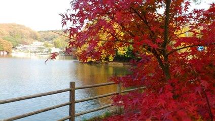 一碧湖の紅葉1