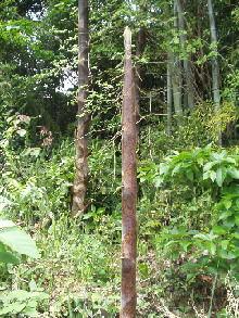 竹のアニキ