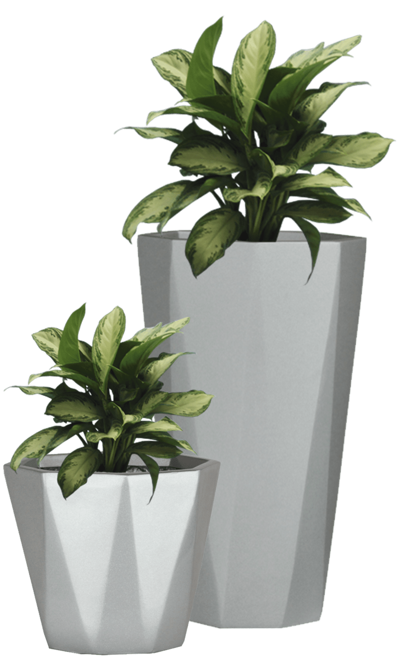 Small House Plants With Flowers Indoor Plants Transparent Png Clipart Free Download Ya Webdesign