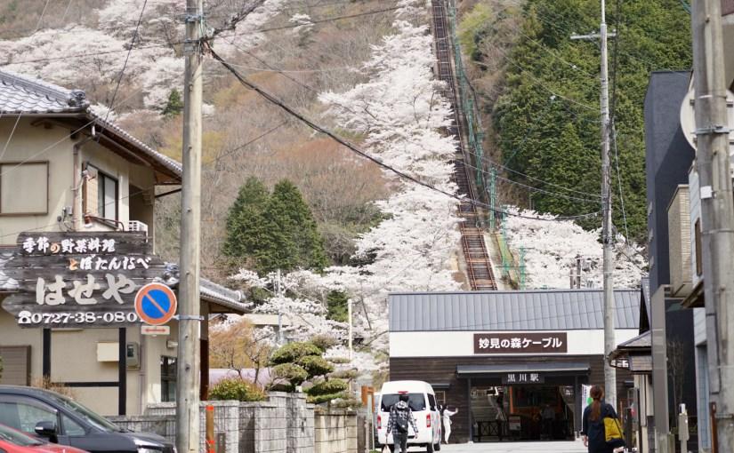 160407_sakura