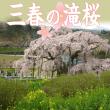 miharu_sakura_eyecatch