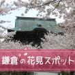 kamakura_sakura_eyecatch