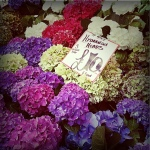 Day3 その4 ロンドンの紫陽花その他お花 London2016