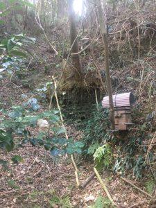 日本ミツバチ 巣箱