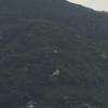 山中に桜の樹。こんな風に生きたい。 #240