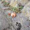 熟れ柿で気付く。季節の移ろいの前では、自分の悩みなど些細なこと。 #419