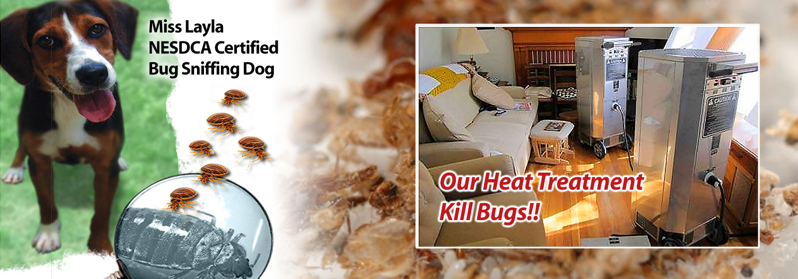 Bed And Breakfast Woburn Bed Bug Treatment In Woburn Ma Yankee Pest Control