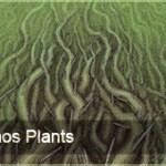 ChaosPlant