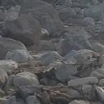 Large Rocks Needed