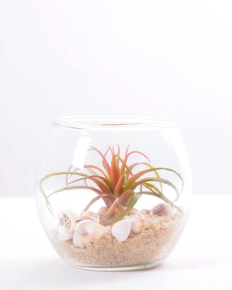 Glass Factory Manufacturer 6 6 7cm Succulent Plants In Round Glass Cup Gs 3030313