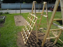 Small Of Trellis For Cucumbers