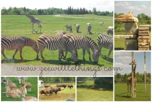 African Lion Safari Family Pass GIVEAWAY (ONTARIO, CANADA)