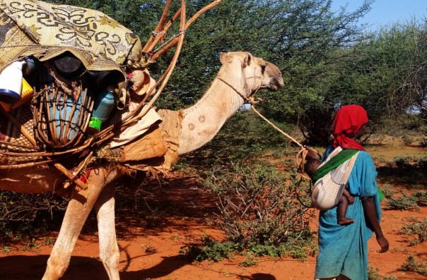Photograph of nomad woman with camel near Ali Essa, Togdheer Region (c) yeheb.org