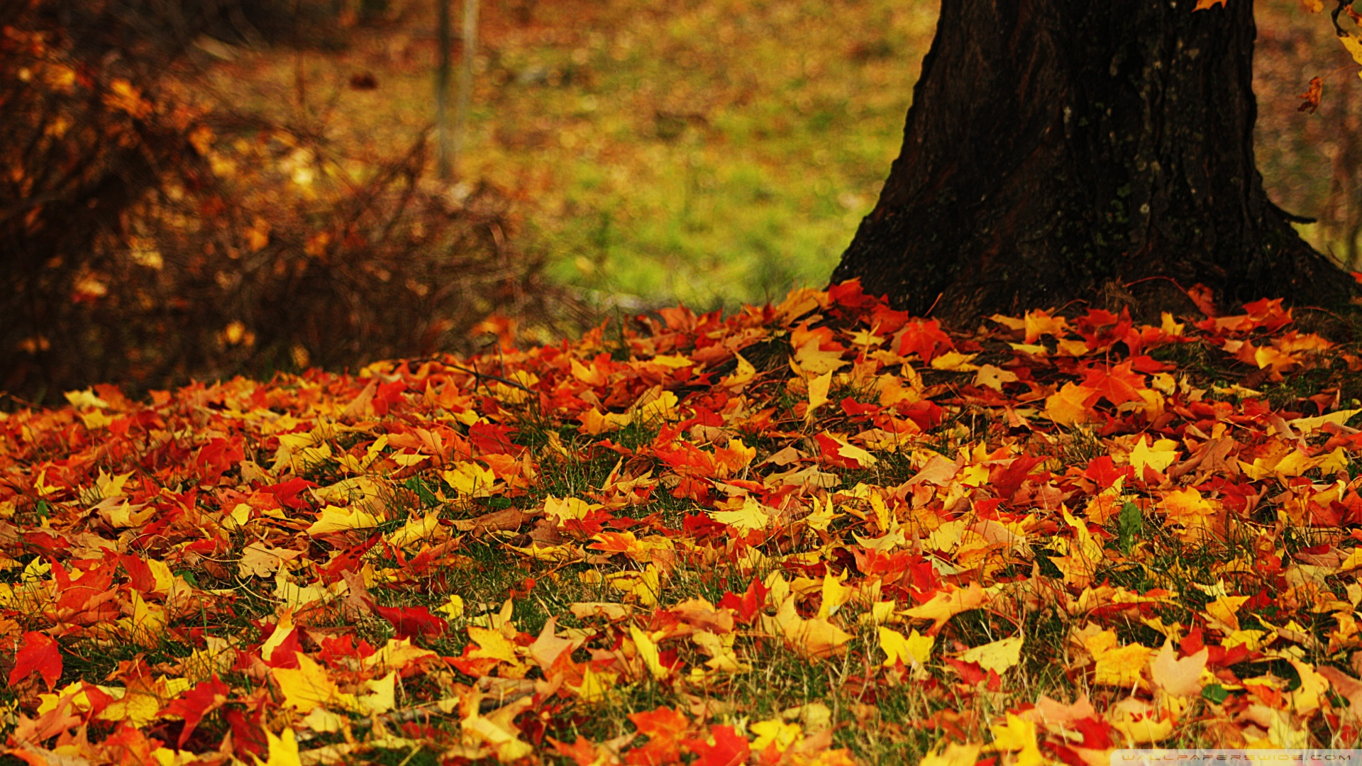 Beautiful 3d Wallpaper For Android Autumn Leaves Wallpapers High Quality Download Free