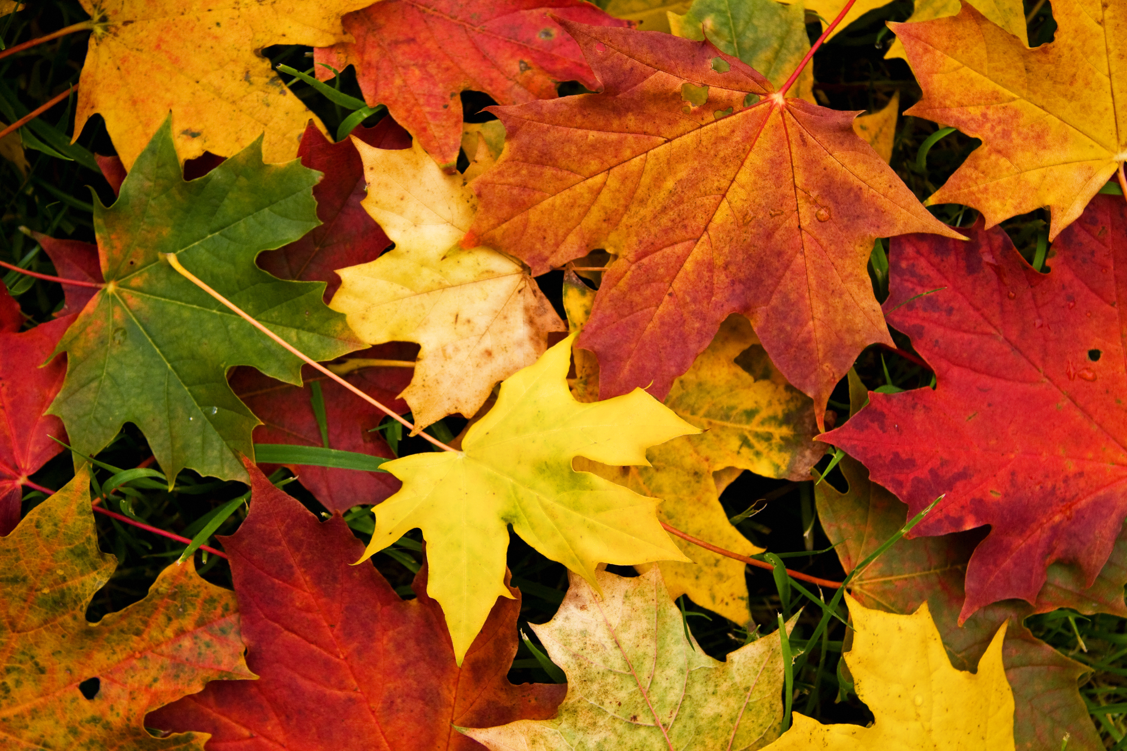 Fall Of The Leafe Wallpaper Autumn Leaves Wallpapers High Quality Download Free