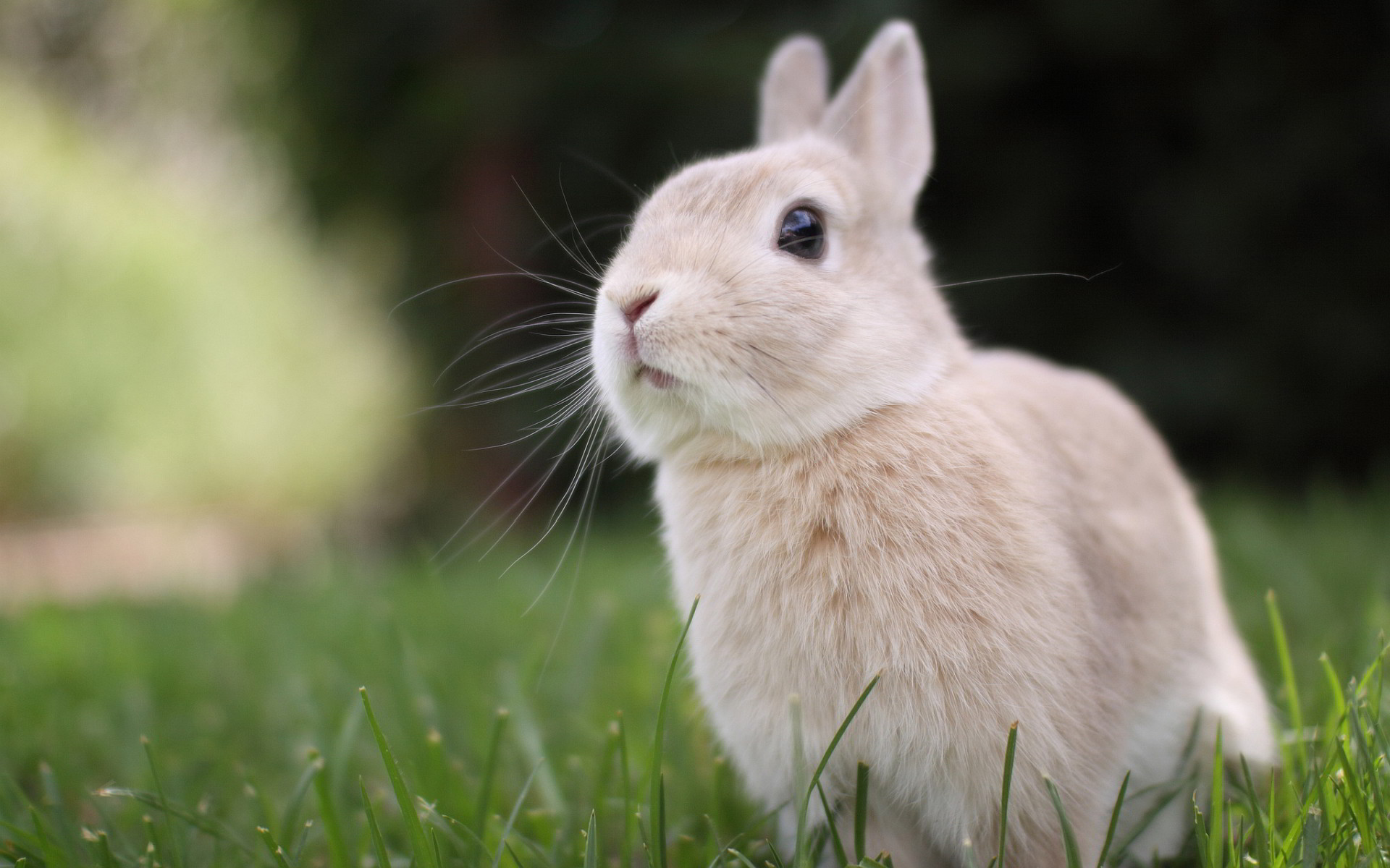 Cute Rabbit Wallpaper Free Download Bunny Wallpapers High Quality Download Free
