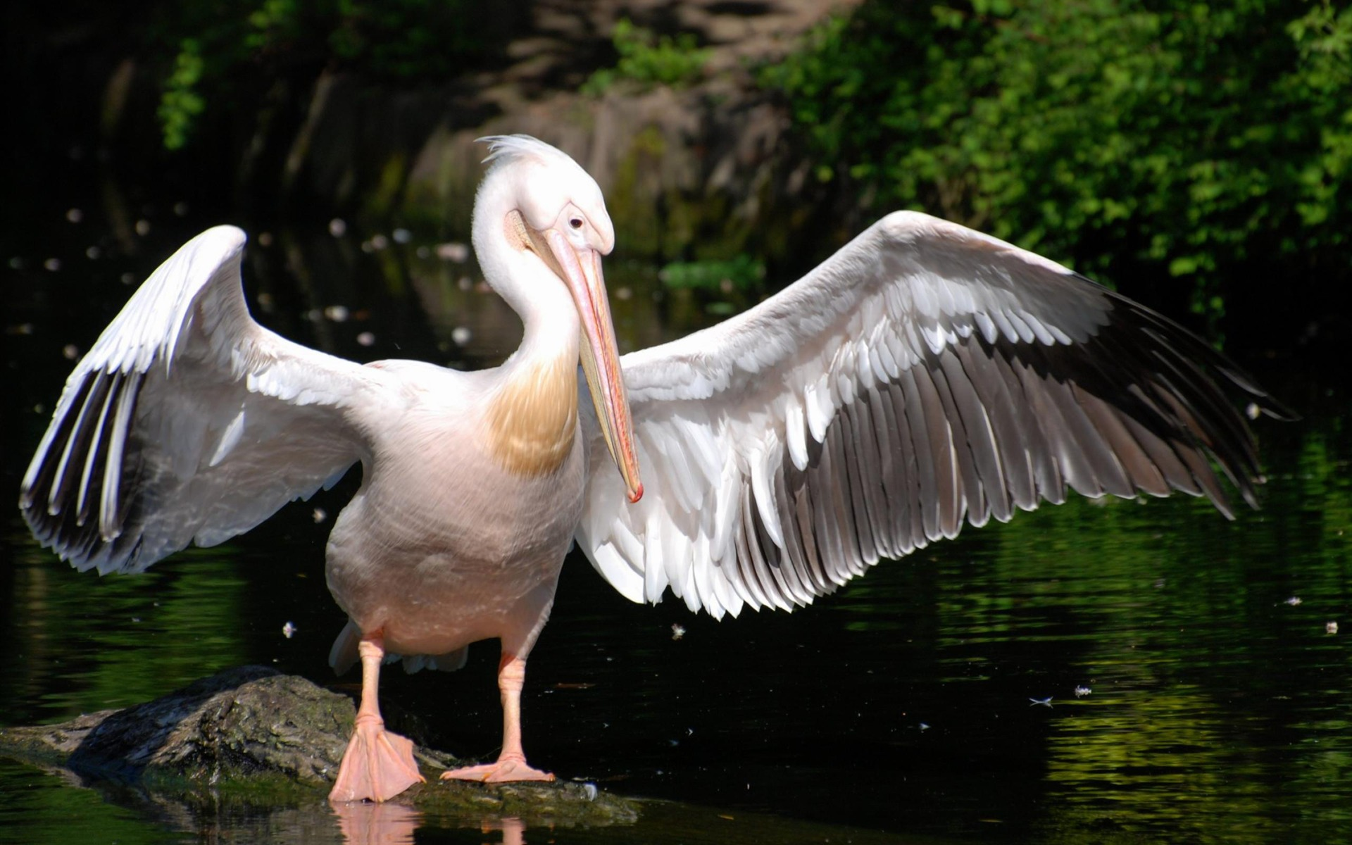 Smartphone Wallpapers Hd Free Pelican Wallpapers High Quality Download Free