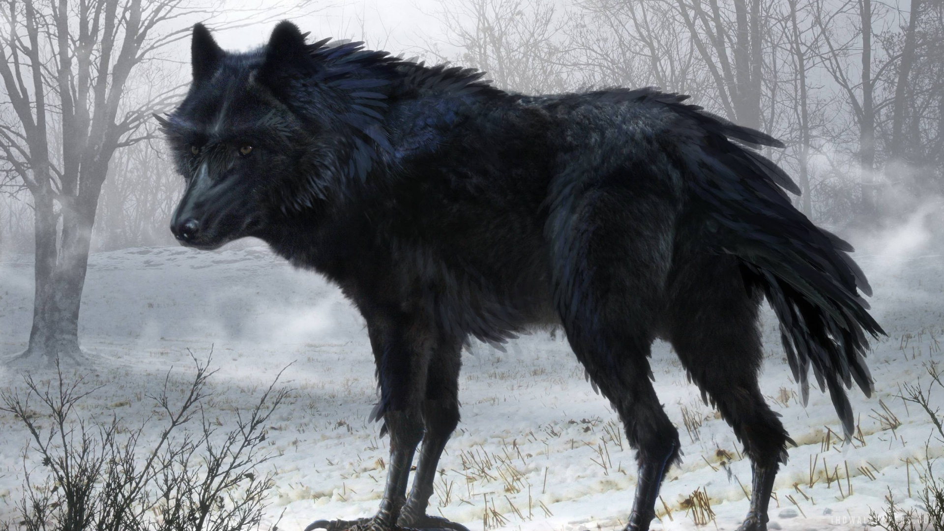 Black Wolf Wallpaper Black Wolf Wallpapers High Quality Download Free
