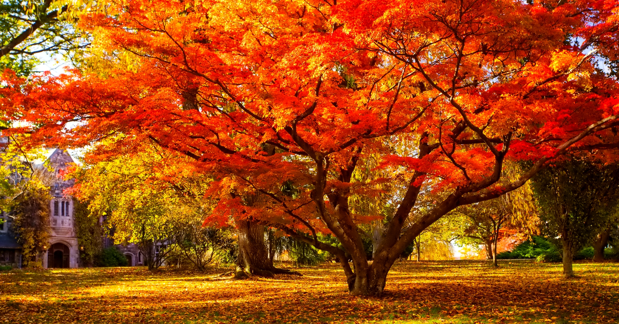 Falling Water Wallpaper 1080p Red Leaves Tree Wallpapers High Quality Download Free