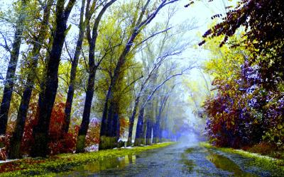 After Rain Wallpapers High Quality | Download Free