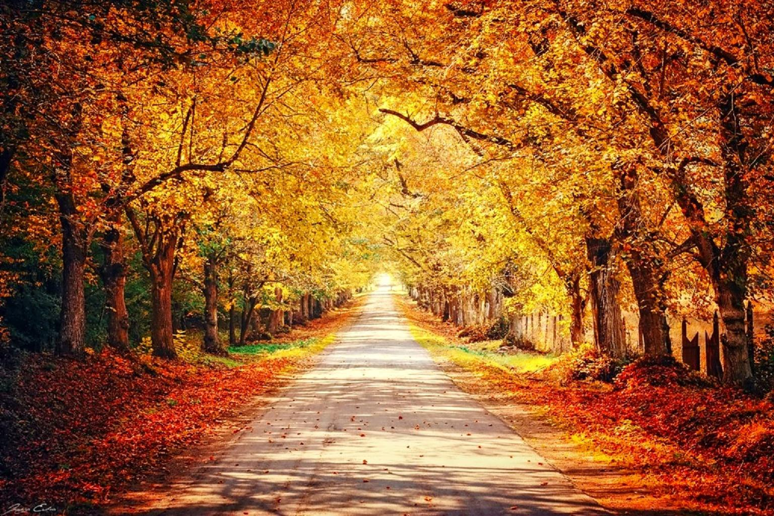 Fall Hd Wallpapers For Mac October Wallpapers High Quality Download Free