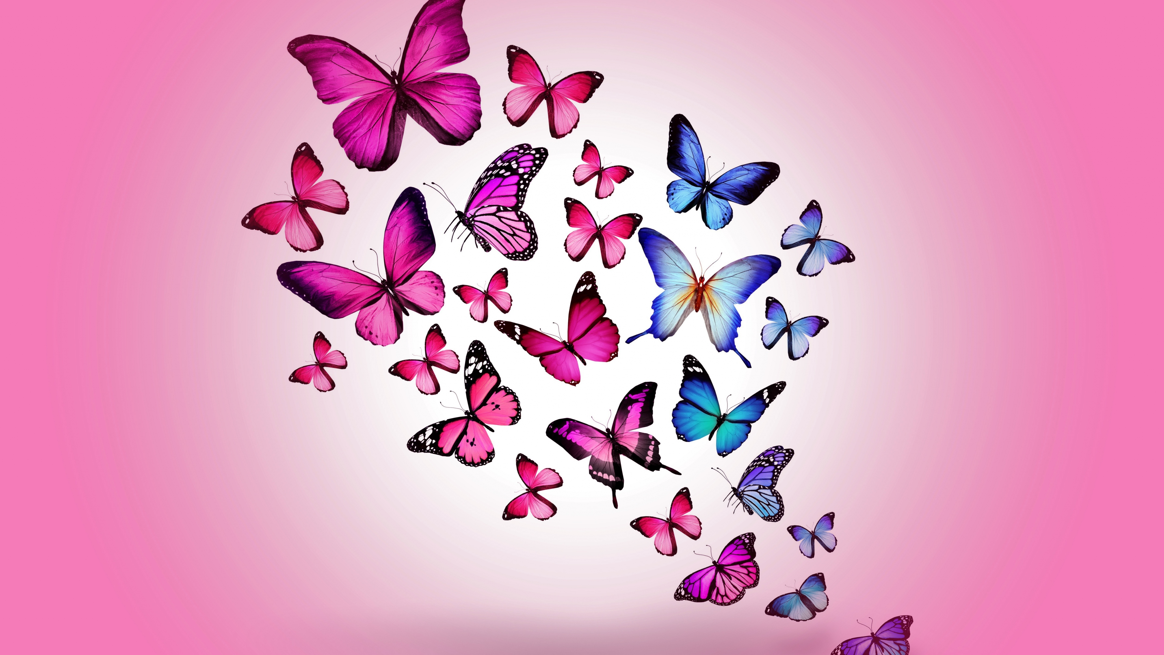 Best Hd Wallpaper For Android Mobile 4k Butterfly Wallpapers High Quality Download Free