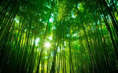 Bamboo Forest Wallpapers High Quality | Download Free