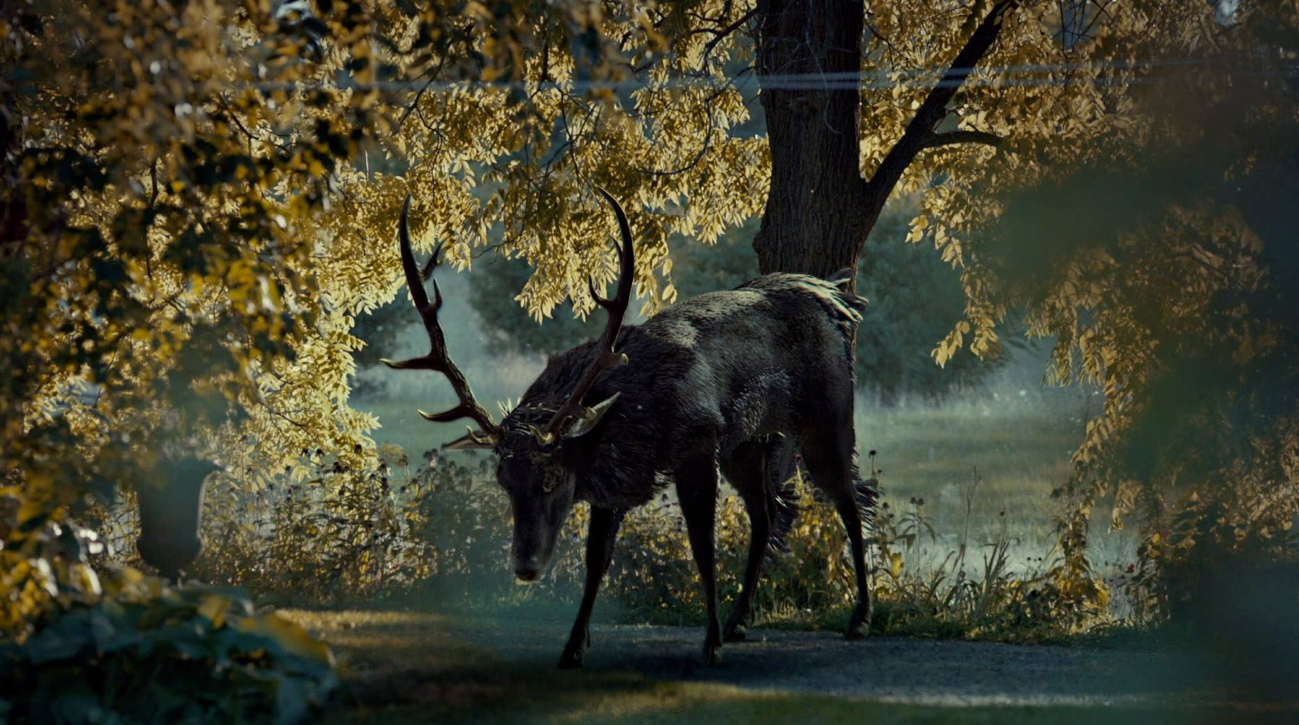 True Detective Wallpaper Iphone Hannibal Wallpapers High Quality Download Free
