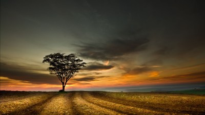 4K Lonely Tree Wallpapers High Quality | Download Free