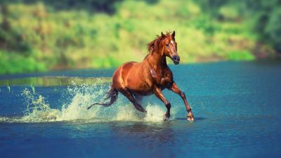 4K Horses Wallpapers High Quality | Download Free