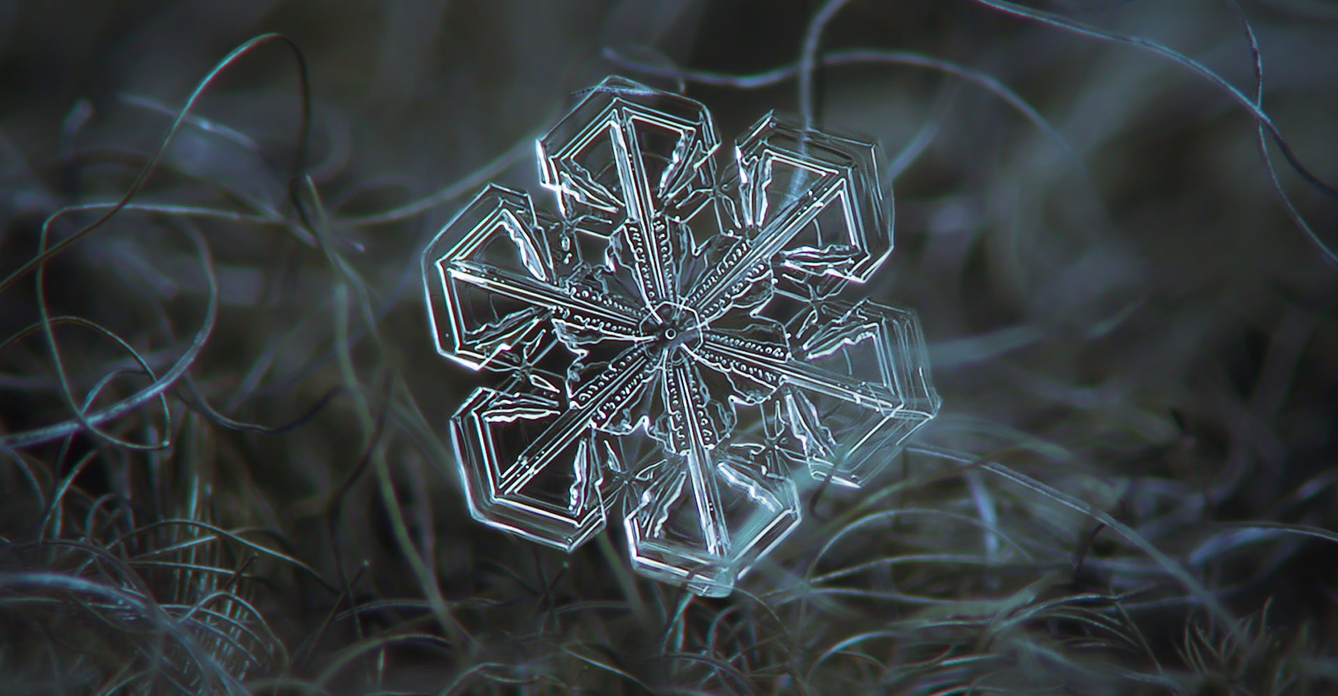 Falling Snow Wallpaper Iphone Snowflake Macro Wallpapers High Quality Download Free