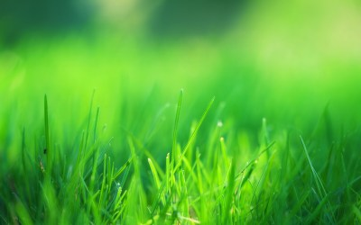 4K Green Grass Wallpapers High Quality   Download Free