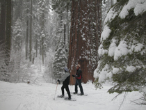 Yosemite Beginner Snowshoe Hikes