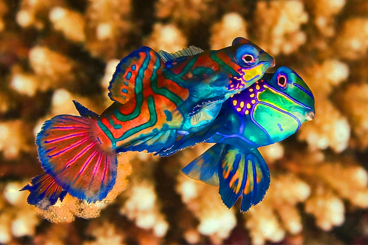 The Fall Bbc Wallpaper Yiral Colourful Creatures 13 Yiral