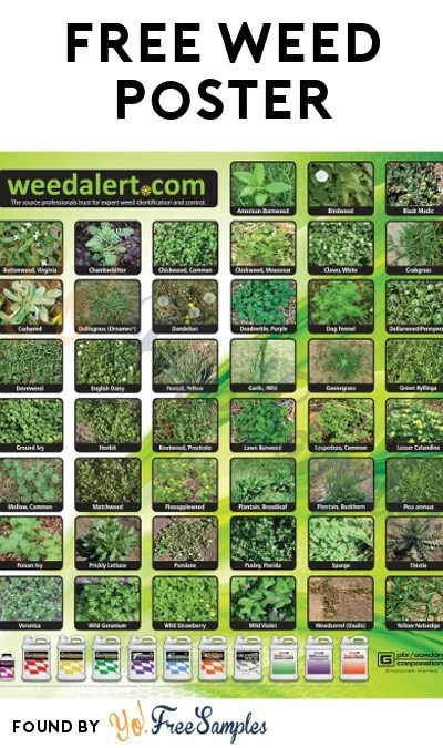 FREE Weed Alert Poster Verified Received By Mail - Yo! Free Samples