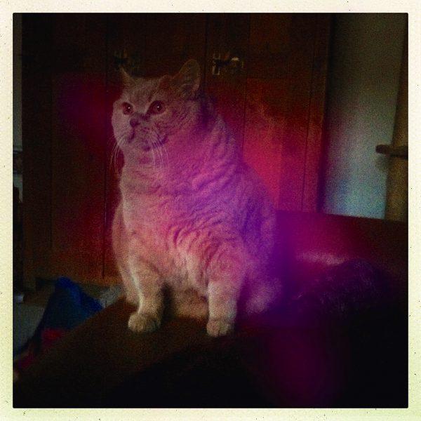 weigerung cat