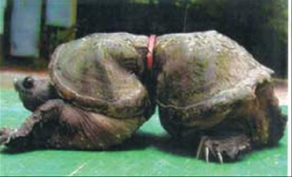 efectos-de-la-polucion-de-los-plasticos-en-una-tortuga.jpg