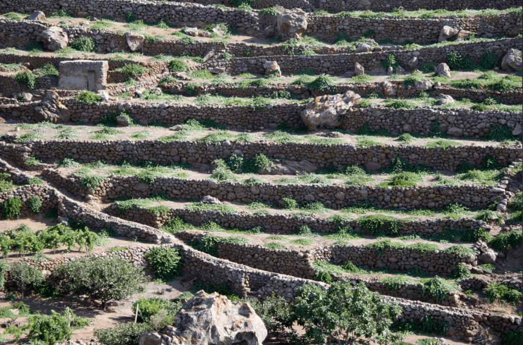 Capers grow, Pantelleria, Italy