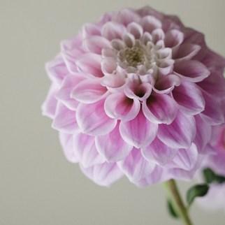 Florist in Skipton, North Yorkshire