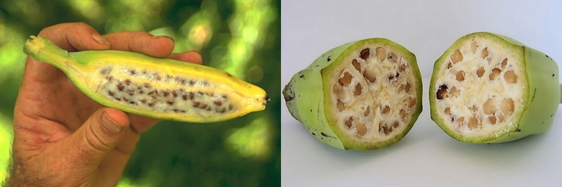 Large Of Banana With Seeds