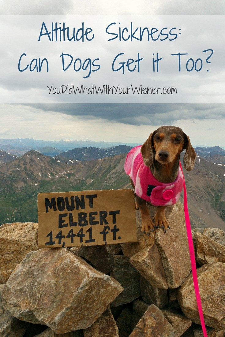 Posh Colorado I Wondered If Our Plans Mydogs Would Can Dogs Get Altitude Why Can Dogs Not Drink Beer Ok Google Can Dogs Drink Beer Climbing Est Peak bark post Can Dogs Drink Beer