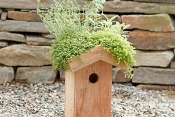 birdhouse_greenroof