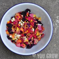 How to Harvest, Dry, and Use Rose Petals