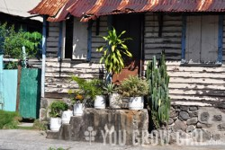 A front steps container garden in the Newtown, a neighbourhood in Roseau, Dominica.