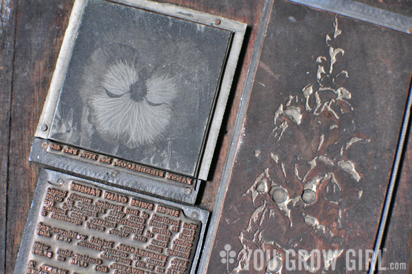 Dominion Seed Vintage Print Block