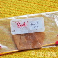 How to Test the Germination Rate of Your Old Seeds