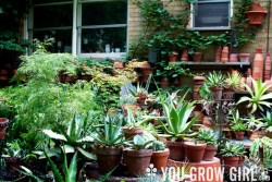 Garden Tour: Uli Havermann and Paul Zammit