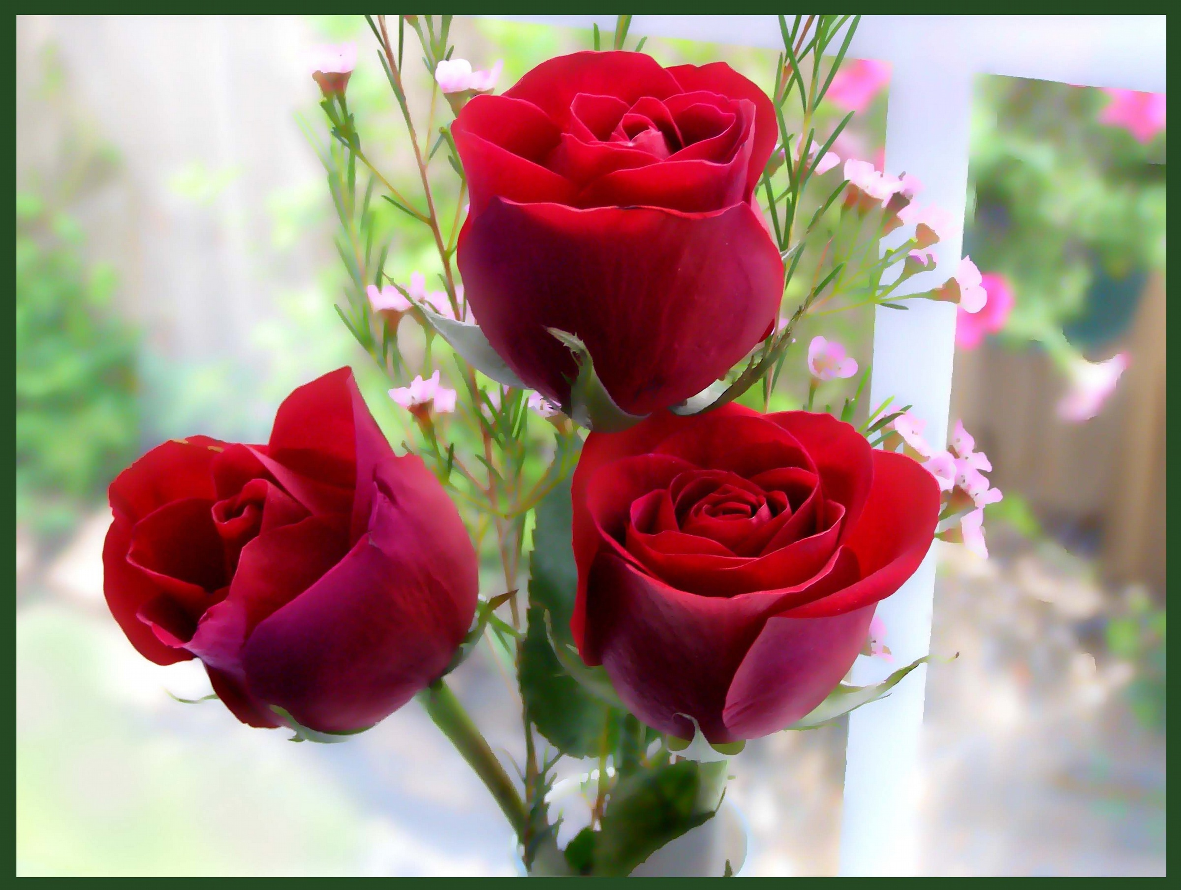 World S Top 100 Beautiful Flowers Images Wallpaper Photos