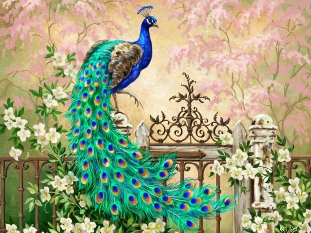 Short Quotes Wallpapers Hd Top 100 Most Beautiful And Colorful Pictures Of Peacock