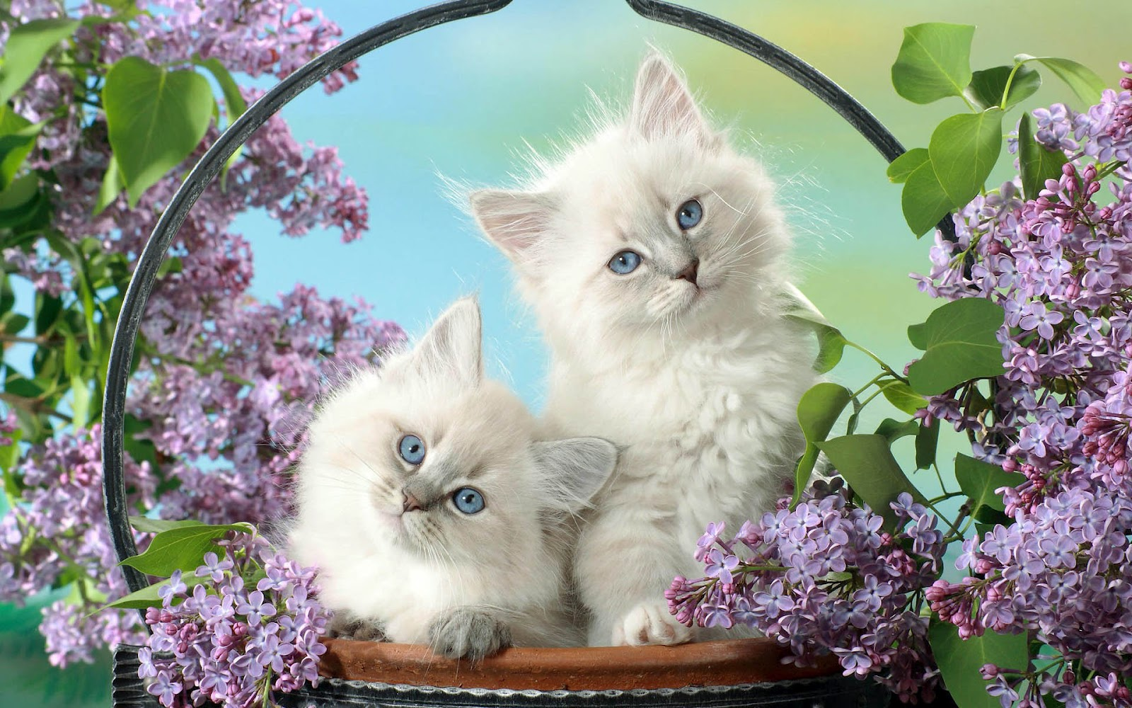 Stunning Black Wallpapers Cute Cats Amp Dogs Wallpapers Images Free Download For
